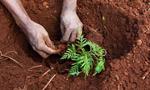 Kenyan_Tree_Planting_a