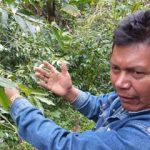 <!--:en-->Chiapas' Coffee Growers: Accidental Environmentalists<!--:-->