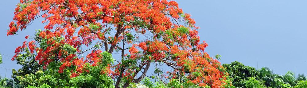 Haiti Chery
