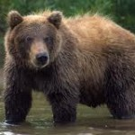 <!--:en-->Interview of Doug Peacock | Protection Restored for Yellowstone Grizzlies<!--:-->