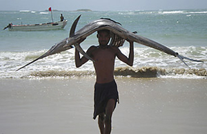 A fisherman carries a sword fish on his head from the Indian Ocean in the port city of Kismayu (Credit: Reuters).