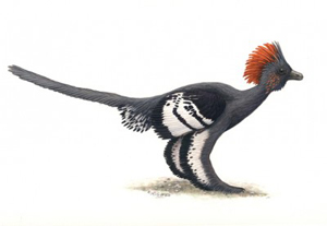 Dinosaur_bird