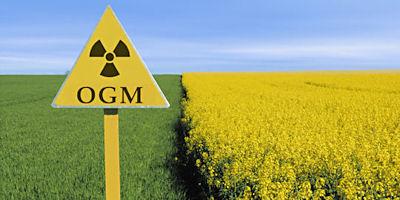GMO_Field_400