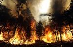 Pineywoods_wildfires_sm