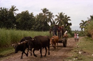 Oxen pulling a cart of Haitian farmers, 1978 (Credit: Marie, Grand Venice -
