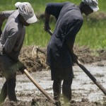 <!--:en-->Haiti's Agriculture Expected to Crash in 2012<!--:--><!--:fr--> | Vers la diminution de la production agricole en 2012<!--:-->