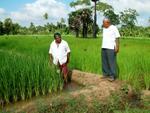 Rice_SriLanka
