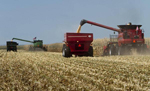 Tractors_farm
