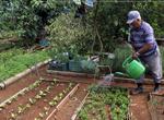 Cuba_crops_a