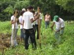 Reforestacion_managua