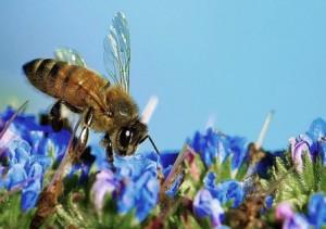 Bee_flower_b