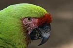 Haitian_Bird_sm