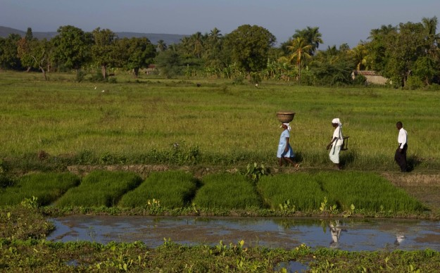 People walk along a path through rice fields in the Artibonite area of Haiti about an hour north of Port au Prince, Haiti. With the many natural disasters that have befallen Haiti in the past year, Haitian rice farmers are faced with an even more difficult task of cultivating a profitable industry in rice production. Photo Logan Abassi UN/MINUSTAH